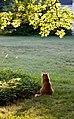Gillie in the morning (5799838692).jpg