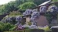 Glyzinien-Blüte.jpg