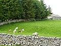 Goats at Ellerbeck - geograph.org.uk - 1382290.jpg