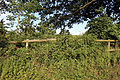 Good Easter, Essex, England - fence, hedgerow, and oak on road to ford over River Can east of Good Easter village.JPG