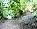 Gower Hey Wood - geograph.org.uk - 1481342.jpg