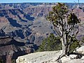 Grand Canyon 2014 - panoramio.jpg
