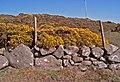 Granite boulder wall - geograph.org.uk - 393804.jpg