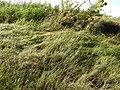 Grass (20603208111).jpg