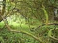 Grassmainton Strip - geograph.org.uk - 244186.jpg
