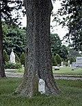 Gravestone In Tree.jpg