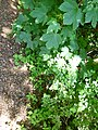 Greenwood forest farming 04.JPG