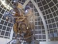 Griffith Park - Los Angeles - Observatory - Telescope.jpg