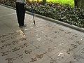 Ground calligraphy park china.jpg