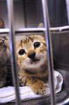 Guantanamo Veterinary Care DVIDS299639.jpg