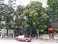 HK CWB 大坑 Tai Hang 銅鑼灣道 Tung Lo Wan Road red temple sign October 2019 SS2 50.jpg