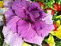 HK Sai Wan Ho flower July-2013 purple.JPG