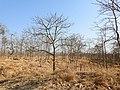 Habitat Tansa WLS by Dr. Raju Kasambe DSCN4979 (6).jpg
