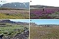 Habitats of bumble bees (10.3897-zookeys.866.35084) Figure 2.jpg