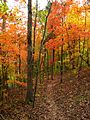Hall-bend-trail-foliage-tn1.jpg