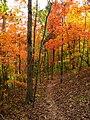 Hall-bend-trail-foliage-tn1.jpg