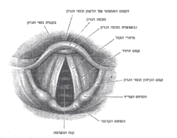 פנים בית הקול