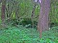 Heim Mound.jpg