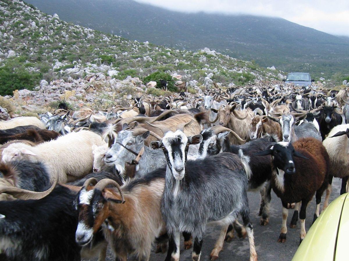 Herde  Herde – Wiktionary