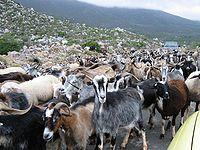 Herde – Wiktionary | {Herde 12}