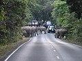 Hin Tung, Mueang Nakhon Nayok District, Nakhon Nayok 26000, Thailand - panoramio (11).jpg