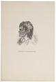 Homo sapiens - Nieuw-Zeeland - 1700-1880 - Print - Iconographia Zoologica - Special Collections University of Amsterdam - UBA01 IZ19500068.tif