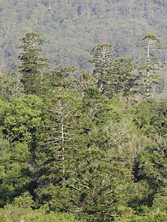 Mallanganee National Park Protected area in New South Wales, Australia
