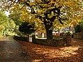 Horse chestnut at Cockington - geograph.org.uk - 1561852.jpg
