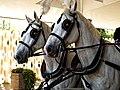 Horse drawn hearse horses City of London Cemetery 6 lighter.jpg