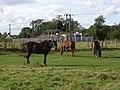 Horses, Bockhampton - geograph.org.uk - 230218.jpg