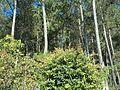 Hutan Gunung Banyak.jpg