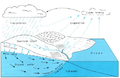 Hydrologic cycle.png