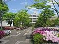 Hyogo-u.jpg