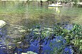 Ichetucknee River 1.jpg