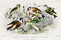 Illustration from A History of the Earth and Animated Nature by Oliver Goldsmith from rawpixel's own original edition of the publication 00060.jpg