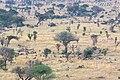 Impressions of Serengeti (111).jpg