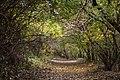 In the forest near Ubezhenskaya - panoramio (20).jpg