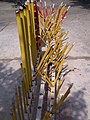 Incense sticks at Po Lin Monastery 2.jpg