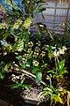 Internationale Orchideen- und Tillandsienschau Blumengärten Hirschstetten 2016 i.jpg