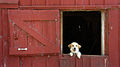 Iowa Farm (7336459720).jpg