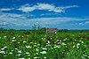 Ipswich Prairie.jpg