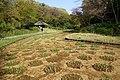 Iris bed - Meiji Shrine - Tokyo, Japan - DSC05503.jpg