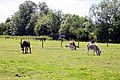 Island Farm Donkey Sanctuary - geograph.org.uk - 1353116.jpg