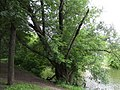 Izmaylovo District, Moscow, Russia - panoramio (3).jpg