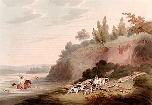 Jackal coursing - Hunting Jackals by Samuel Howitt, illustrating a group of golden jackals rushing to the defence of a fallen pack-mate