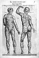 Jacques Guillemeau, Male anatomical figures Wellcome L0023640.jpg