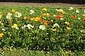 Jardin des plantes en fleurs à Paris le 3 avril 2017 - 26.jpg