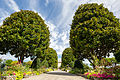 Jardin du monastère de Cimiez, Nice, France.jpg