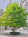 Jardins de la Cathédrale Saint-Corentin de Quimper.jpg