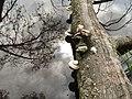 Jezioro Orle 2 - panoramio.jpg